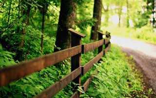 На каком расстоянии от дома можно сажать деревья: норма СНиП, СанПиН и закон