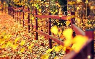 На каком расстоянии от забора можно сажать деревья: норма посадки СНиП и закон 2020