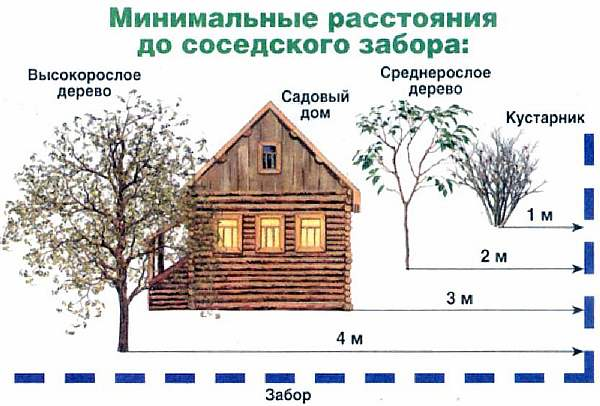 Дистанция от деревьев