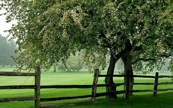 Нормы посадки деревьев от жилых домов