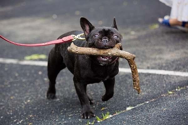 Собака в городе