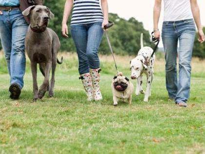 Собаки с поводками