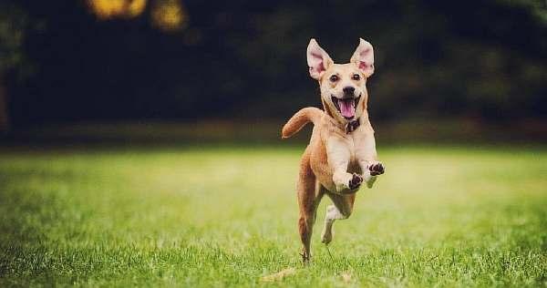 Гуляющая собака в городе