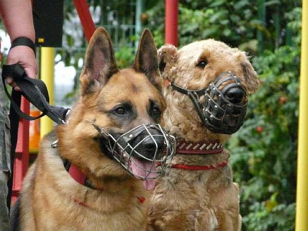 Собаки в намордниках
