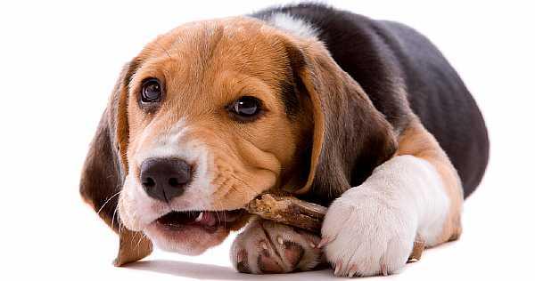 Играющий щенок