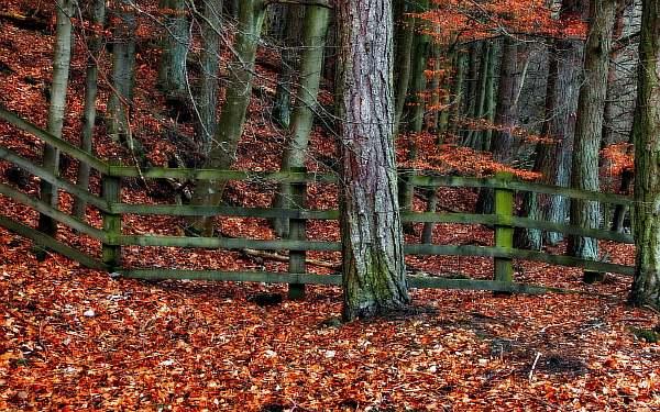 Около леса